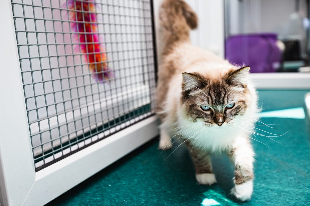 Cat in the cattery at Campus Vets and Pets