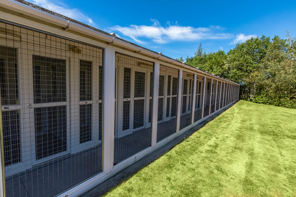 Boarding Kennels at Campus Vets and Pets