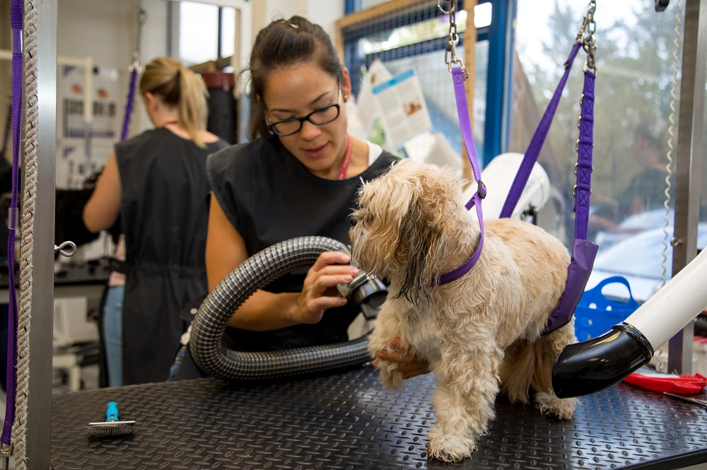 Dog Grooming Teacher: Is it the role for you?
