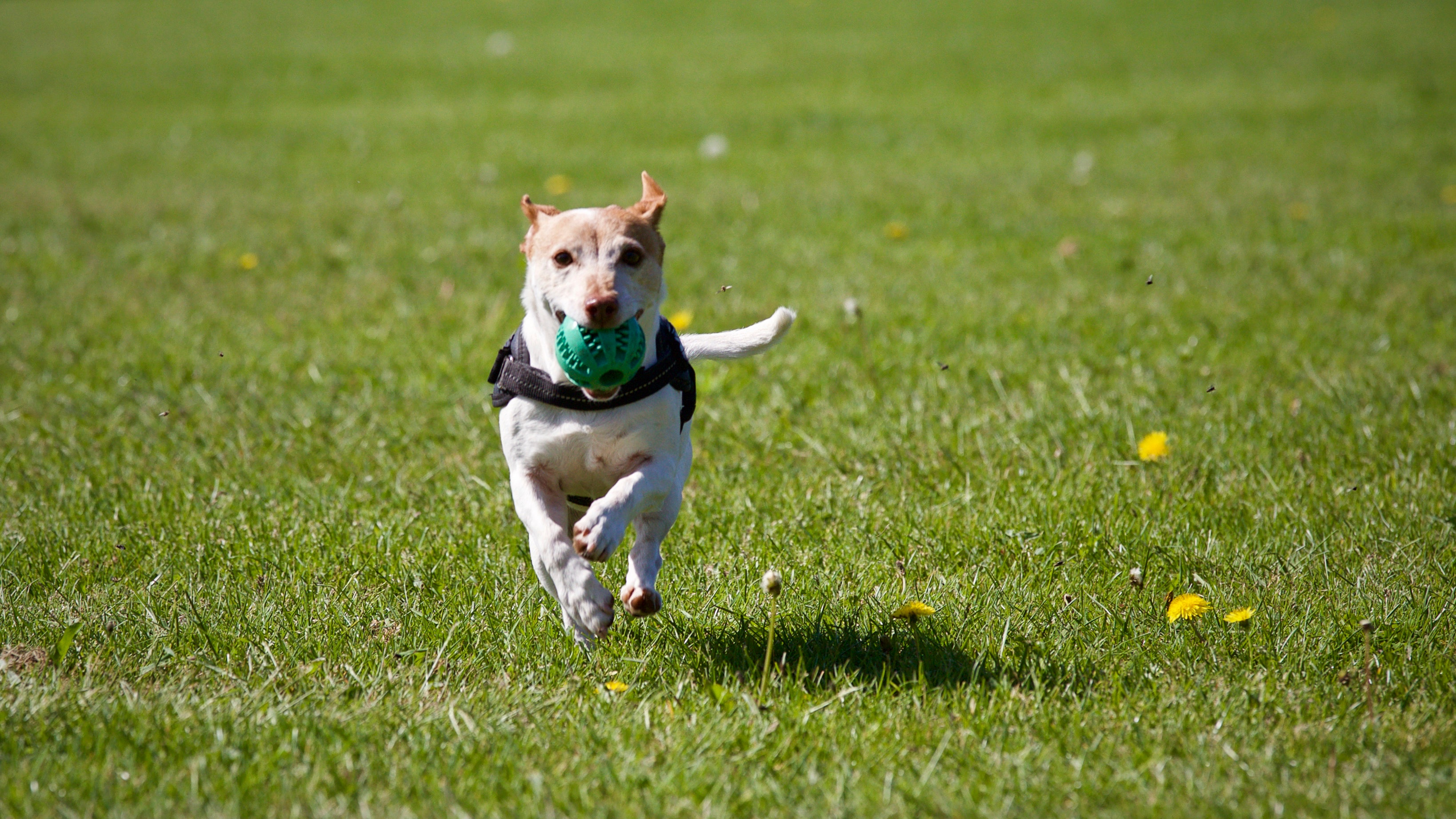 Top Tips for Training Troublesome Pups!