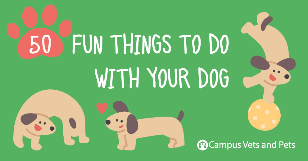 50 Fun Things To Do With Your Dog