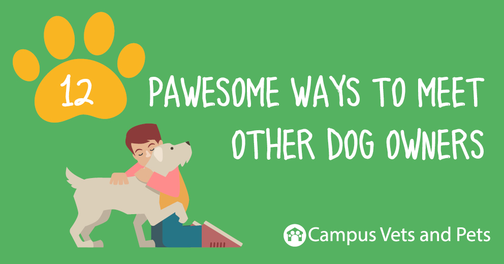12 pawesome ways to meet other dog owners