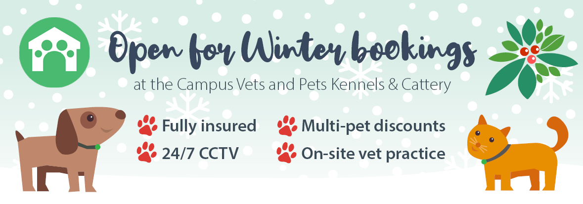 Kennel and cattery winter bookings article featured image