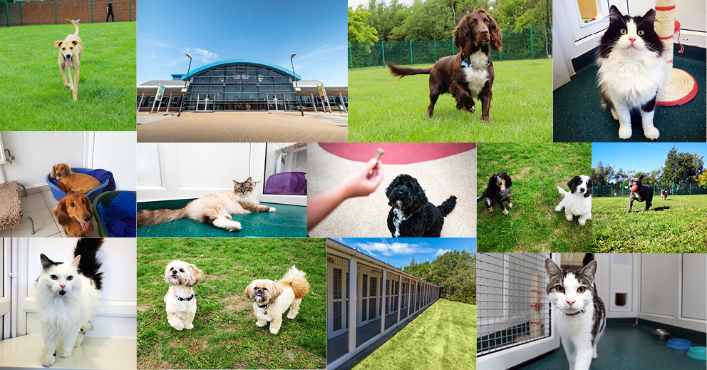 Our Boarding Kennels & Cattery Two Years On